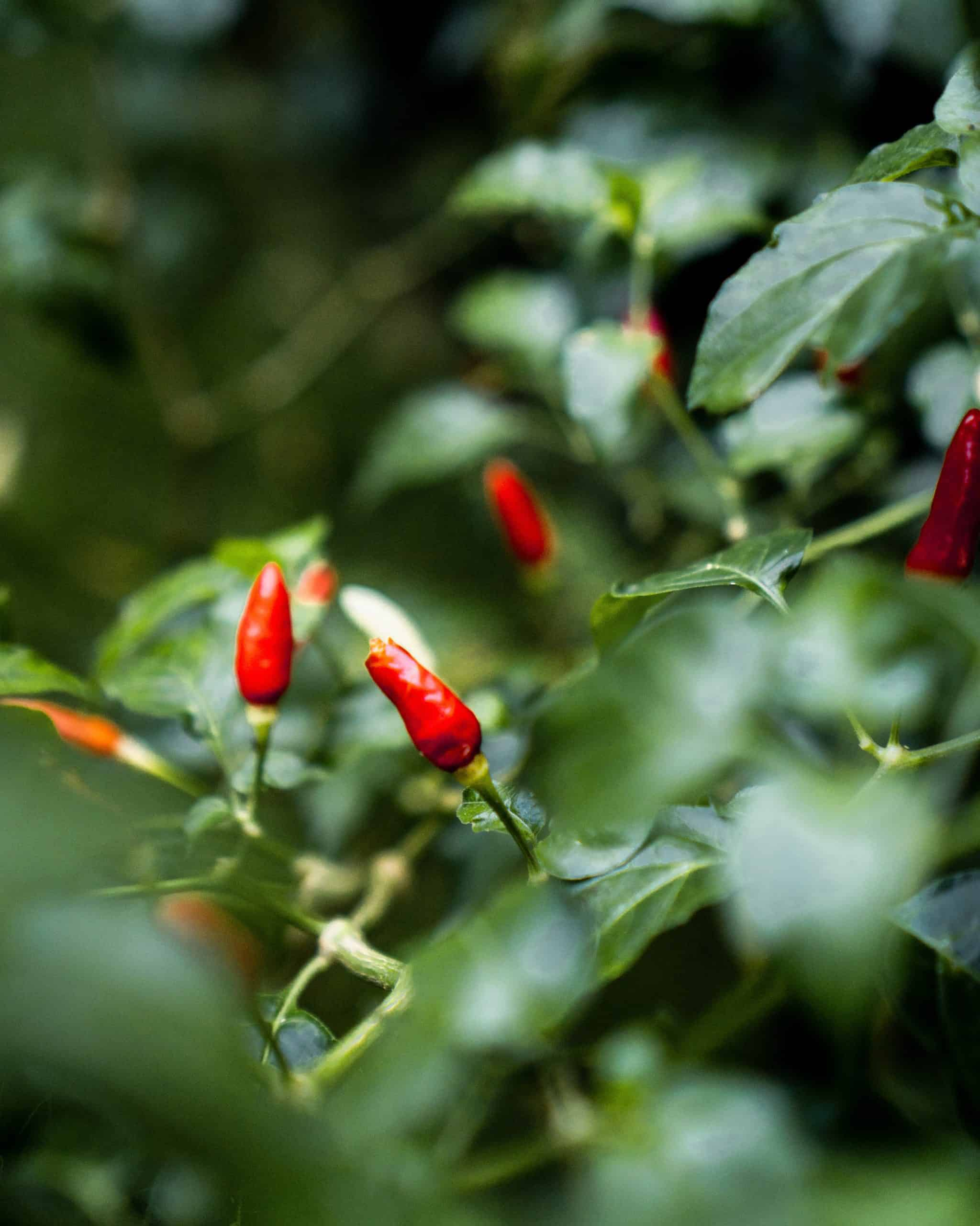 Spicy Food: Does It Cause Cancer?